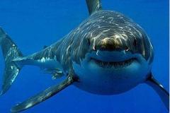 Акулы_океанариум