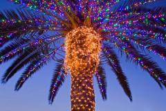 пальма в огоньках