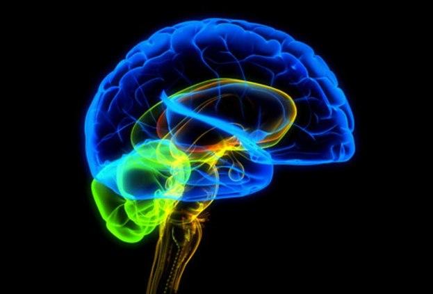 gologramma-mozga